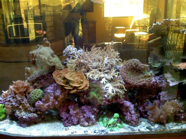Routine Aquarium Maintenance in Denver | Great Barrier Reef